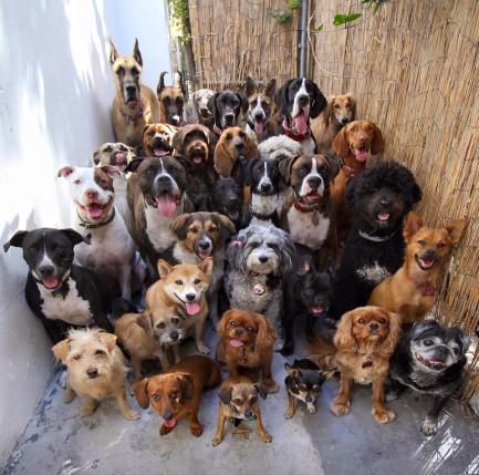 30 dogs mugging for the camera